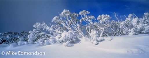 Iced Snowgums, Great Alpine Road