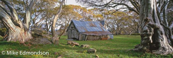 Wallaces Hut amongst the snowgums